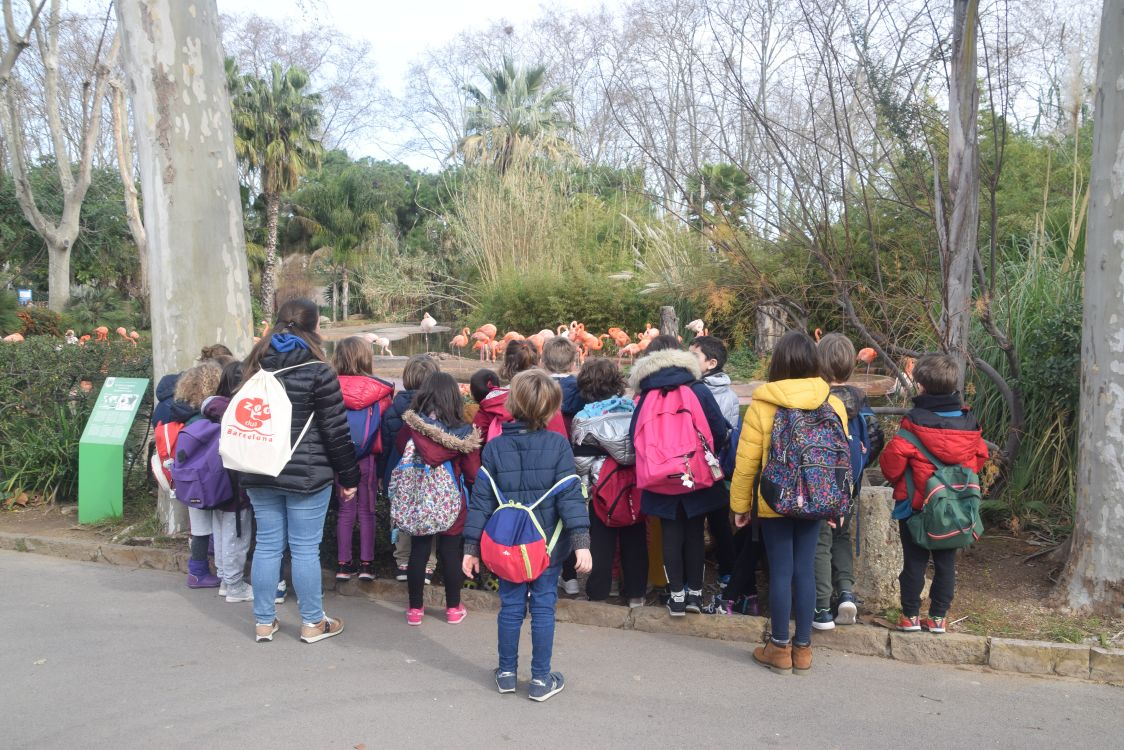 Escolalurdes_Zoo1r02